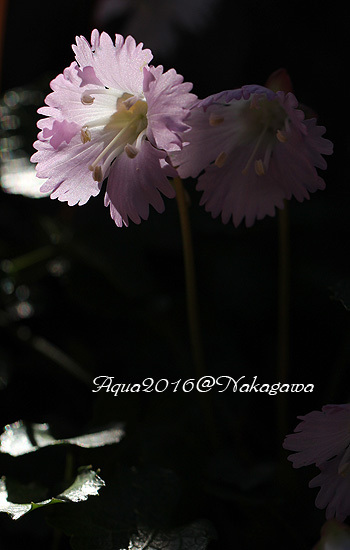 IMG_7628.jpg